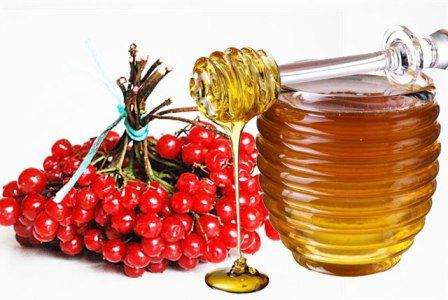 Калина и мед при гипертонии