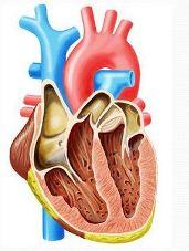 Верхнее давление и сердце