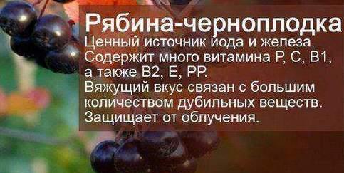 Польза черноплодка