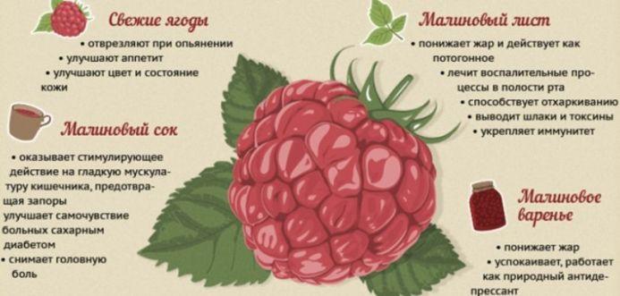 Польза малины