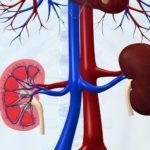 Высокое почечное давление: лечение и профилактика