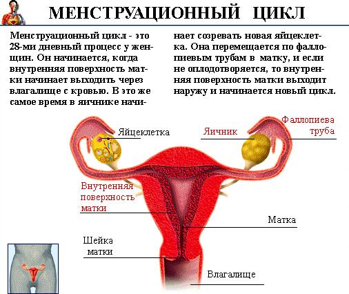 что такое месячные у женщин