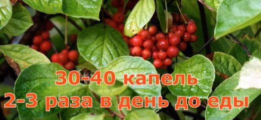 Изображение - Травы повышающие давление при гипотонии liminnik