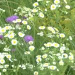 Полезные травы для повышения артериального давления