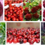 Полезные ягоды, нормализующие артериальное давление