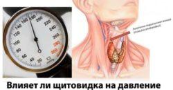 Действие щитовидной железы на давление человека